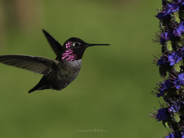 Humming Birds Series #1
