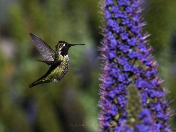 Humming Bird Series #2